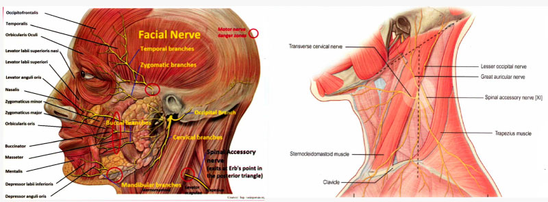 Clifton-Beach-Medical-and-Surgical---Pre-and-Post-op-video-title---Nerve-damage-diagram